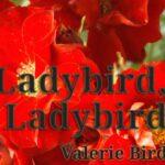 Ladybird, Ladybird Literary Fiction by independent author Valerie Bird