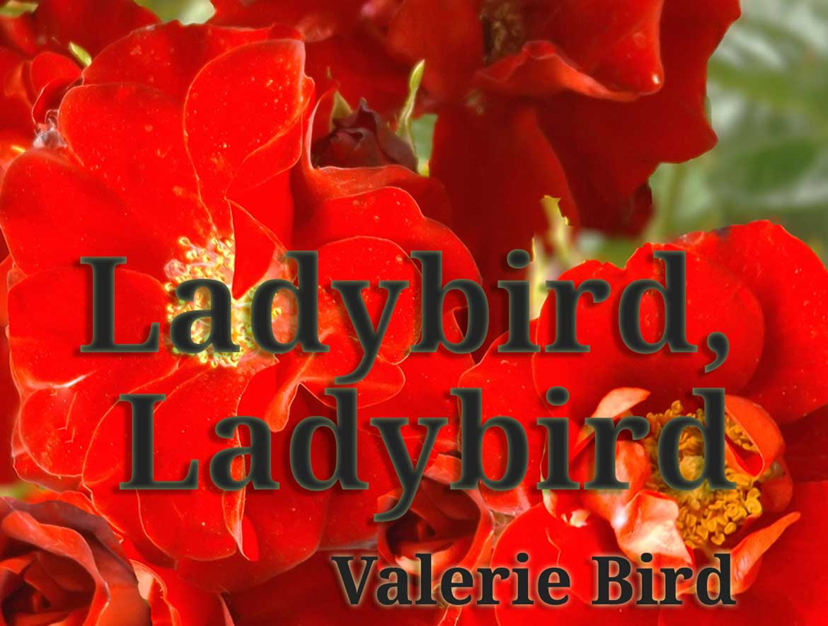 Ladybird, Ladybird Literary Fiction by independent author Valerie Bird